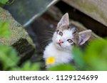 cute kitten in summer | Shutterstock . vector #1129124699