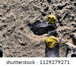 close up picture of a geyser... | Shutterstock . vector #1129279271