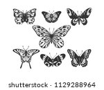 butterfly insect animal...   Shutterstock . vector #1129288964