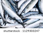 Stock photo frozen mackerel frozen group of fish iced atlantic fish mackerel mackerel pattern mackerel 1129303247