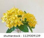 yellow flower spike and green... | Shutterstock . vector #1129309139