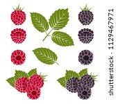 ripe red raspberries and... | Shutterstock .eps vector #1129467971