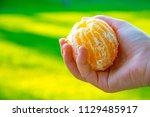 orange  citrus in hand | Shutterstock . vector #1129485917
