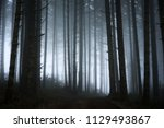 Abstract Dark Forest With Fog ...