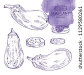 collection of eggplant  full... | Shutterstock .eps vector #1129580261