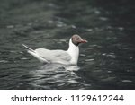 sad grey gull in light day... | Shutterstock . vector #1129612244