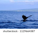 humpback whale tail in maui | Shutterstock . vector #1129664387