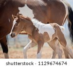 mom and baby paint horses   Shutterstock . vector #1129674674