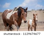 mom and baby paint horses | Shutterstock . vector #1129674677