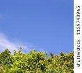 green tree top line over blue... | Shutterstock . vector #1129743965