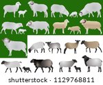 collection of farm animals  ... | Shutterstock .eps vector #1129768811