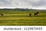 horses at mountain meadows ... | Shutterstock . vector #1129875455