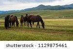horses at mountain meadows ... | Shutterstock . vector #1129875461
