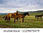horses at mountain meadows ... | Shutterstock . vector #1129875479