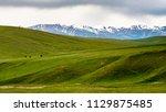 horses at mountain meadows ... | Shutterstock . vector #1129875485