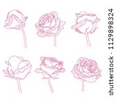rose flowers linear engraving... | Shutterstock .eps vector #1129898324