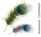 two peacock feathers isolated... | Shutterstock .eps vector #1129904024