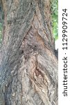 texture of an old tree. chapped ... | Shutterstock . vector #1129909724