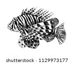 hand drawn vector lionfish.... | Shutterstock .eps vector #1129973177
