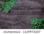 herbal frame with artemisia... | Shutterstock . vector #1129973207
