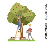 young happy female farmer...   Shutterstock .eps vector #1130017937