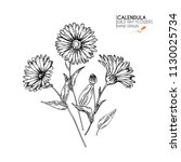 hand drawn wild hay flowers.... | Shutterstock . vector #1130025734