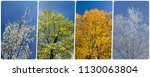 four season collage from... | Shutterstock . vector #1130063804