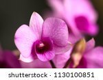 orchid in thailand  | Shutterstock . vector #1130100851
