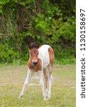 wild horse on assateague... | Shutterstock . vector #1130158697