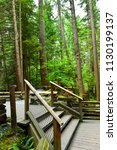 trails in the capilano park for ... | Shutterstock . vector #1130199137