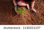 kid planting a tree on dry soil   Shutterstock . vector #1130321237