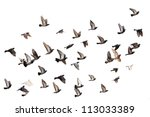 Flying pigeons. flock  flight ...