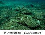 fish under the aegean sea off... | Shutterstock . vector #1130338505