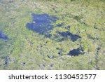 closeup of an algal bloom in a...   Shutterstock . vector #1130452577