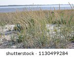 vegetation on the beach and a... | Shutterstock . vector #1130499284