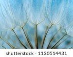 dandelion seed background. seed ... | Shutterstock . vector #1130514431