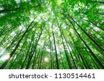 forest trees. nature green wood ... | Shutterstock . vector #1130514461