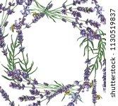 purple lavender. floral... | Shutterstock . vector #1130519837