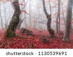 autumn beech forest. mountain... | Shutterstock . vector #1130539691