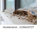 window frame had been damaged...   Shutterstock . vector #1130623727