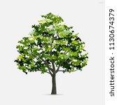 tree isolated on white... | Shutterstock .eps vector #1130674379