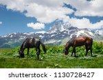 horses graze on green meadow in ... | Shutterstock . vector #1130728427