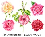 set of beautiful roses on... | Shutterstock . vector #1130779727