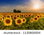 Beautiful Sunflower Field...