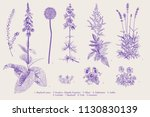 set garden flowers. classical... | Shutterstock .eps vector #1130830139