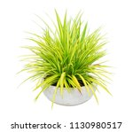 Spider Plant Tree Pot Isolated...