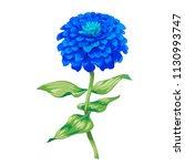 beautiful blue flower zinnia... | Shutterstock .eps vector #1130993747