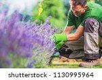 caucasian men cleaning garden... | Shutterstock . vector #1130995964
