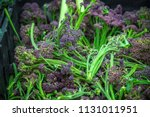fresh purple sprouting broccoli ... | Shutterstock . vector #1131011951