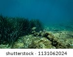 fish at the bottom of the... | Shutterstock . vector #1131062024